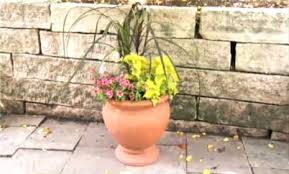 Plants For Patios In The Shade Top Butterfly Container Garden Ideas