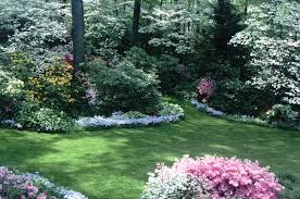 Small Backyard Landscaping Ideas For Privacy Landscaping With Rhododendrons And Azaleas
