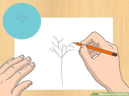 how to draw a real tree 8 steps with pictures wikihow