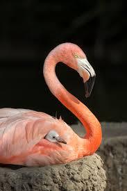 14 adorable baby animal facts u2013 zoonooz