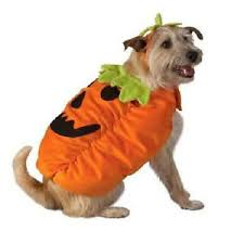 Halloween Pet Costume Jack Lantern Dog Costume Large Pumpkin Autumn Fall Halloween Pet