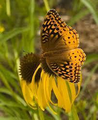 butterfly garden mizzou botanic garden of missouri