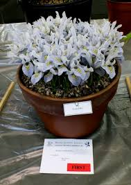 Scottish Rock Garden Forum Kendal Show 14th March 2015 Ags Shows Members On Line