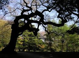 the meaning of trees that s how the light gets in