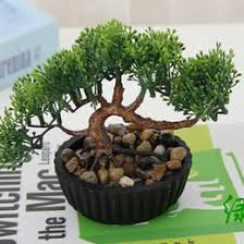 small indoor plants small indoor pot plants for sale