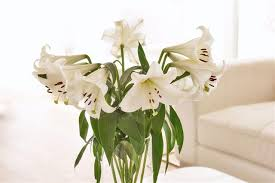 white lilly symbolism of the the flower that is a part of history