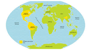 A Picture Of The World Map by Raccoon