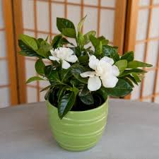 Plants For Office What Are The Best Plants For Offices And Cubicles