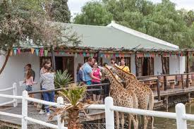 Chandelier Game Chandelier Game Lodge Oudtshoorn South Africa Booking Com