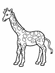 giraffe outline printable clipart free giraffe outline printable
