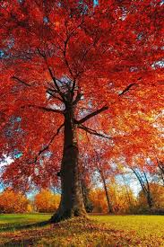 Becks Christmas Tree Farm Hartwell by 254 Best Autumn पतझड Wallpapers Images On Pinterest Fall