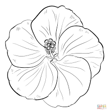 yellow hibiscus coloring page free printable coloring pages