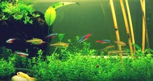Aquarium Decor Ideas How Many Fish For A 20 Gallon Aquarium Stocking Ideas