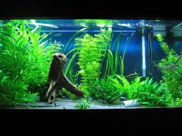 freshwater fish tank decorations