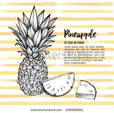 free pineapple vector pack download free vector art stock