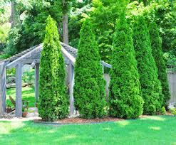 master gardener slender trees work well for smaller landscapes