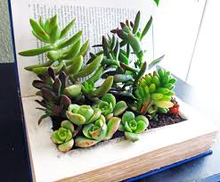 Desk Plant 12 Low Maintenance Plants To Cheer Up Your Boring Desk