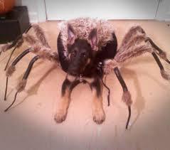 pet costumes spider dog costume