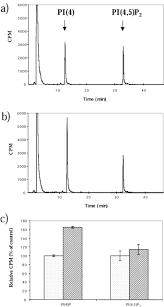 phospholipase c activation by anesthetics decreases membrane