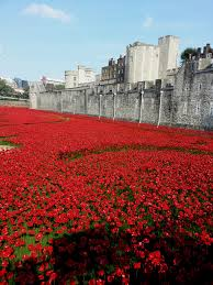 tower of london poppies honoring veterans on armistice day