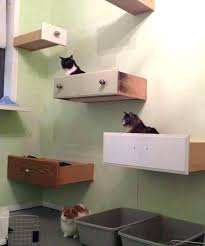 cat wall furniture shelves for cats wall mounted shelves for cats photo 1 shelves