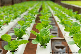 organic hydroponics not for me the healthy home economist
