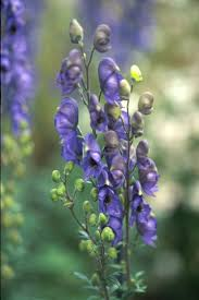 native plants of alaska 29 best 2014 perennials images on pinterest perennials garden