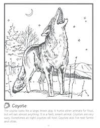 coloring pages coyote coloring page wile e coyote and roadrunner