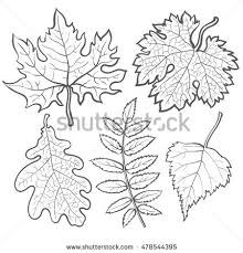set autumn leaves sketch style vector stock vector 478544395