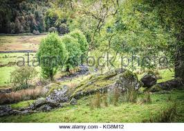 a small copse of trees in a meadow near coniston in the lake