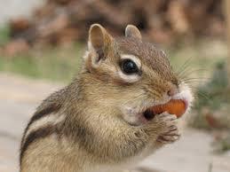 gabbie scoiattoli cura degli scoiattoli come allestire una gabbia tutto ze