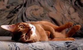 odeur d urine de sur canapé le décrit sur le canapé comment nettoyer l odeur si un a
