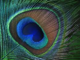 decorating ideas amazing image of green and blue peacock feather