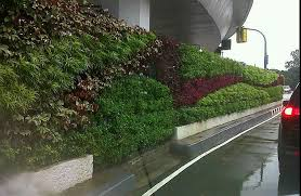 living wall gardens vertical gardens cebu philippines hands of
