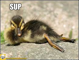 Sup Meme - baby duck funny photos funny pictures animals sup duck ducks