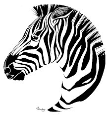 drawn zebra line drawing pencil and in color drawn zebra line