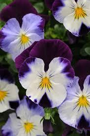 Types Of Planting Flowers - 14821 besten flowering winter plants bilder auf pinterest gärten