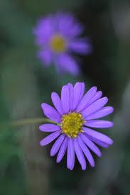 close up photography of purple multi petaled flower free stock photo
