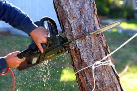 how much does it cost to remove a tree arborserv inc