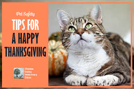 pet safety tips for a happy thanksgiving chaska veterinary clinic