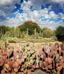 Scottsdale Az Botanical Gardens by Phoenix Arizona Travel Guide Love Always Audrey