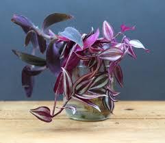 Beautiful Indoor Plants Grow Beautiful Indoor Plants In Glass Bottles Page 2 Of 2 A