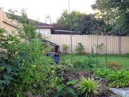 Backyard Trees For Shade - the rainforest garden how to design your own garden 12 easy tips