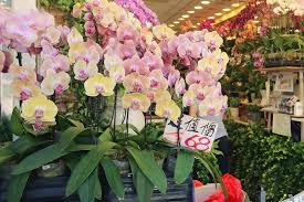 orchids for sale sale of orchids in a flower shop stock photo image of growing