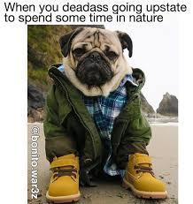 funny dog meme dump album on imgur
