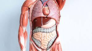 Human Anatomy Careers Human Anatomy And Physiology