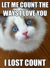 Meme For Love - 40 cute i love you memes we are obsessed with yourtango