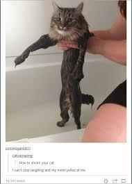 Cat Memes Tumblr - honey i shrunk the cat tumblr know your meme