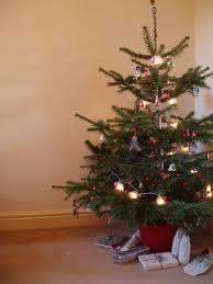 mini tree with lights accessories no pencil
