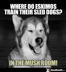 Dog Jokes Meme - dog joke where do eskimos train their sled dogs in the mush room